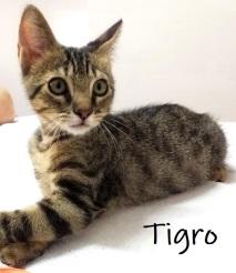 Tigro-0