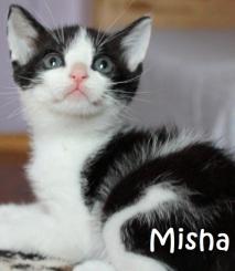 Misha-0