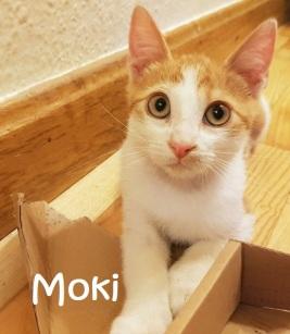 Moki-01