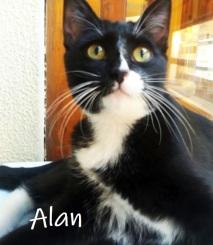 Alan-02