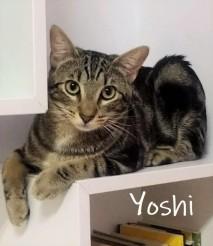 Yoshi-0t