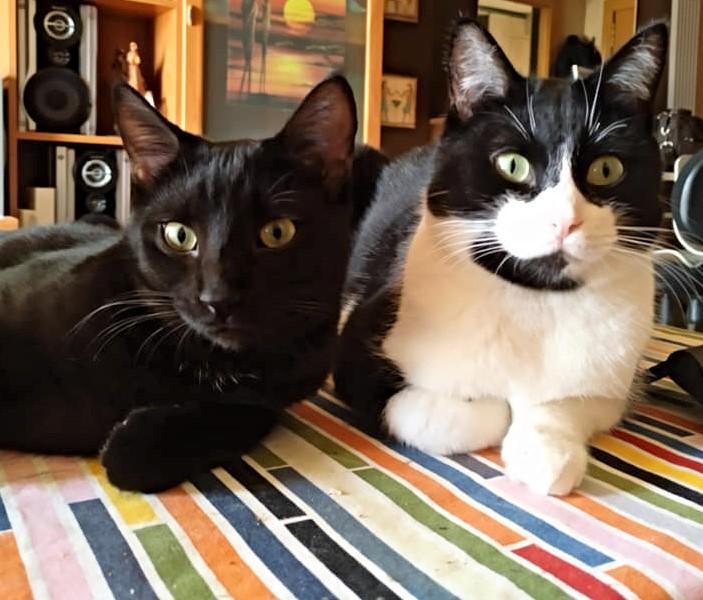 Ron y Pocholo