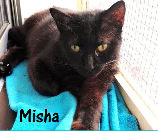 Misha-0q