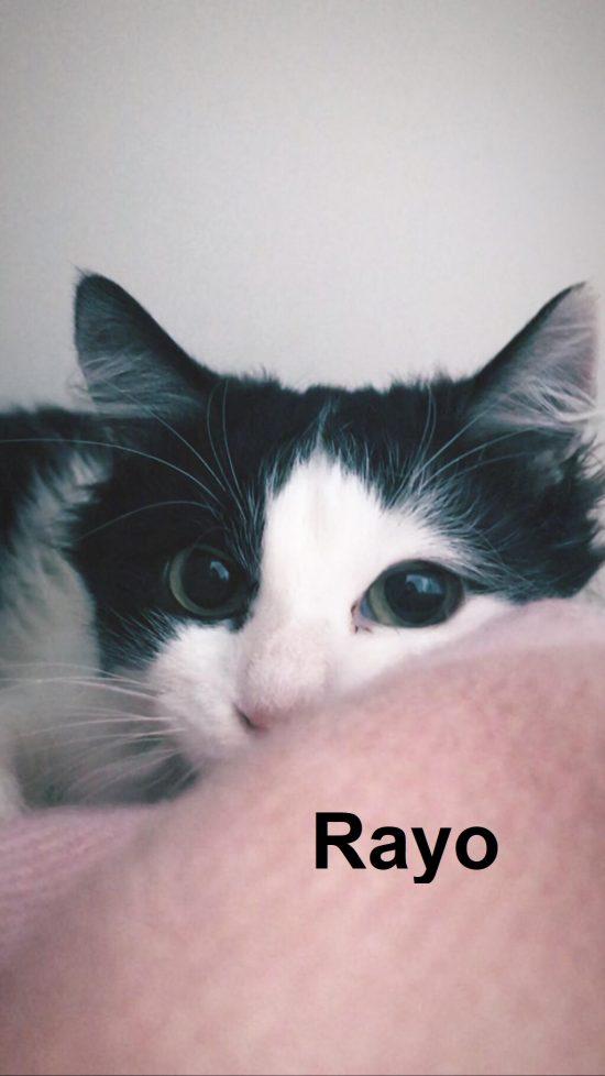 RAYO1